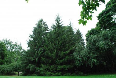 種類 針葉樹 常緑樹の種類 庭木におすすめの低木や中木、高木は? 🍀GreenSnap(グリーンスナップ)
